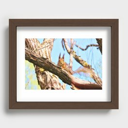 Squirrel on tree branch Recessed Framed Print