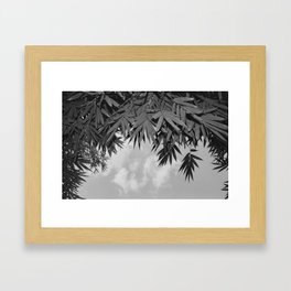 Bamboo By The Pool Framed Art Print