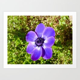 Purple Delight Art Print