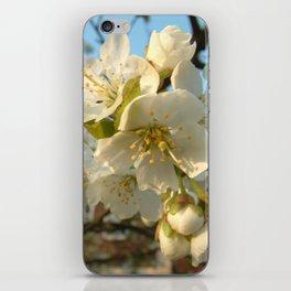 Cherry-tree iPhone Skin