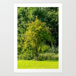 Tree on a meadow Art Print