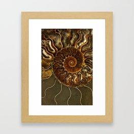 An ancient amonite Framed Art Print