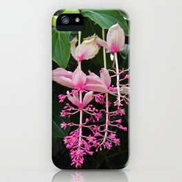 Pink Lantern I iPhone Case