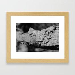 Close up Bark Framed Art Print