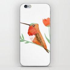 Rufous Hummingbird iPhone & iPod Skin
