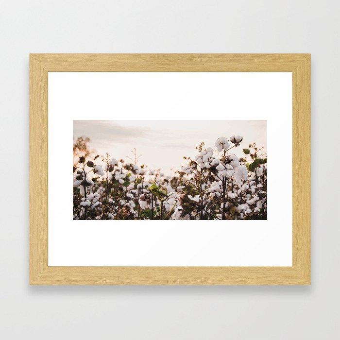 Cotton Field 6 Framed Art Print
