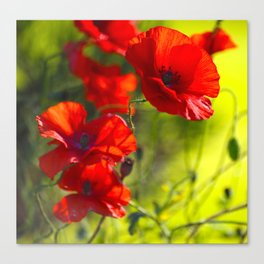 Red Poppies on green background #decor #buyart #society6 Canvas Print