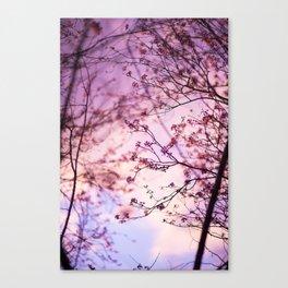 Sakura Canvas Print