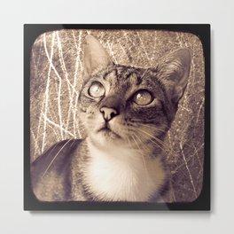 Oh my Cat! Metal Print