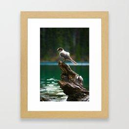 Grey Jay at Joffre Lakes Framed Art Print