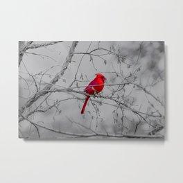 Cardinal Grey Metal Print