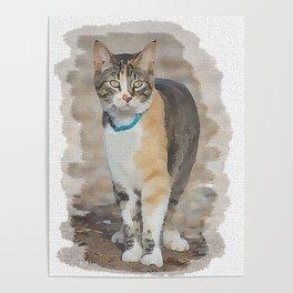 CALICO CAT WATERCOLOR Poster