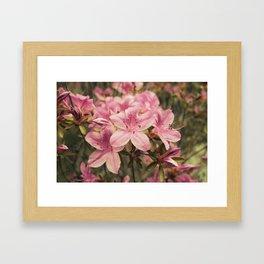 Flowers in the japonese garden of Monaco Framed Art Print