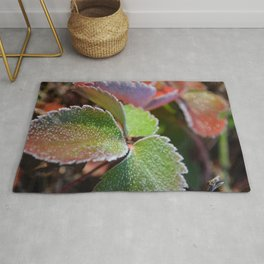 Strawberry frost Rug