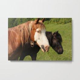 Horses photo Metal Print