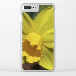 Beautiful Spring Daffodil Clear iPhone Case