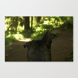 Lop Eared Canvas Print