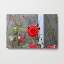 Red Orange Rose Metal Print