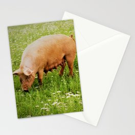 Momma & Piglets in the Meadow Stationery Cards