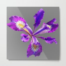 PURPLE DUTCH IRIS FLOWER GREY  DESIGN Metal Print