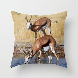 Springboks in Botswana, wildlife Throw Pillow