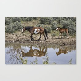 Matching Pair - South Steens Mustangs Canvas Print
