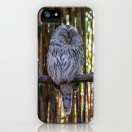 Ural owl resting on a branch iPhone Case
