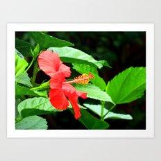 hibiscus profile Art Print