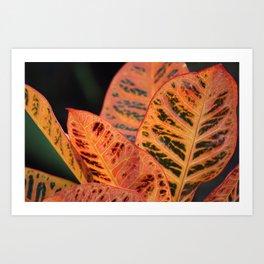 Orange Croton Leaves Art Print