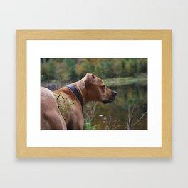 Dog on beaver pond Framed Art Print