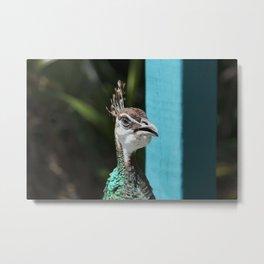 Peacock Hen Metal Print