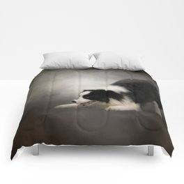 Ready to Play - Border Collie Comforters