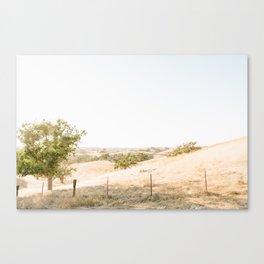 Los Olivos 3 Canvas Print