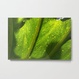 Spotted Leaf Metal Print