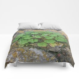 Life on a stone wall Comforters