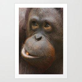 Orangutan Face Art Print