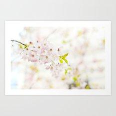 delicate cherry blossom Art Print