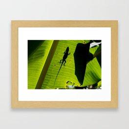 lizard on a leaf Framed Art Print