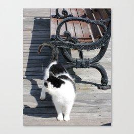 Boardwalk Kitty Canvas Print