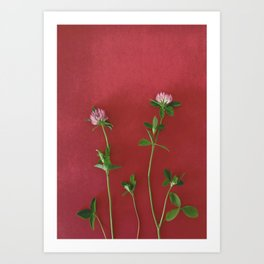 Red clover | Floral photography Art Print