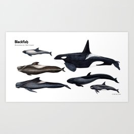 Blackfish Art Print