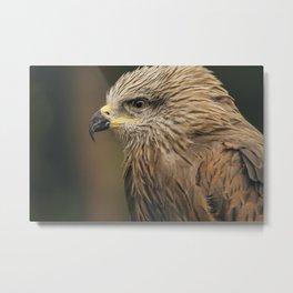 Power Bird I Metal Print