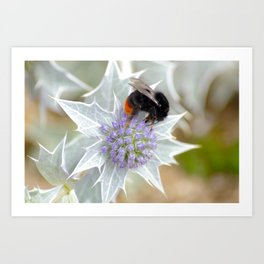Normandy Bee Art Print