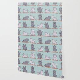 British Shorthair Cat  Yoga Wallpaper