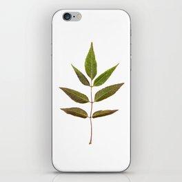 Leaf Botanical Print iPhone Skin