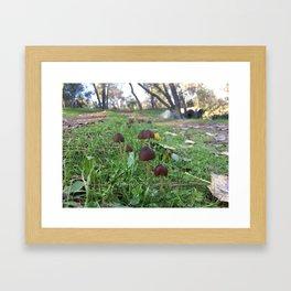 Found Fungus Framed Art Print
