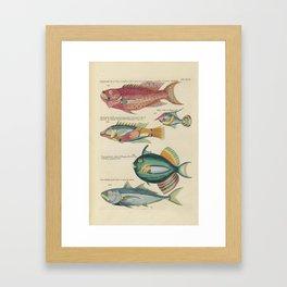 Vintage Fish Illustration V Framed Art Print