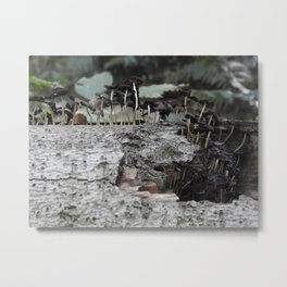 life from dead wood Metal Print