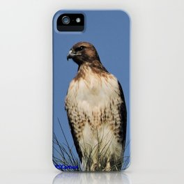 Red-Tailed Hawk on Watch at Foothill and B Street iPhone Case