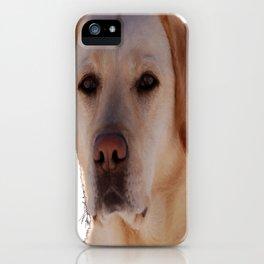 Portrait of A Golden Labrador Dog iPhone Case